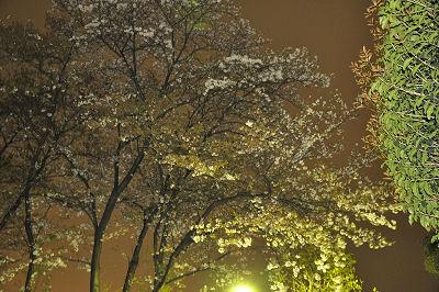 菊名西公園